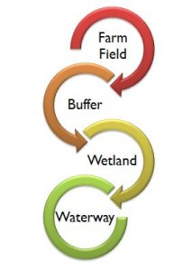 Nutrients and pesticides (shown as red) in runoff are reduced as water moves from farm field to buffer to wetland to waterway.