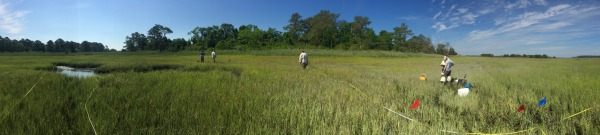 Burtons Island Marsh