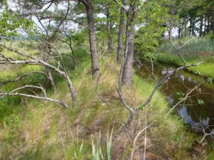 2011 National Wetland Condition Assessment site