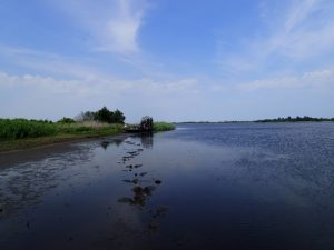 Prime Hook National Wildlife Refuge assessment site before restoration