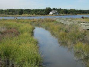 Eco-Explorers walk along the tidal stream and Shoveler Pond at the Aquatic Education Resource Center
