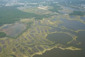 Marsh pooling and mosquito ditches in Delaware's Inland Bays.