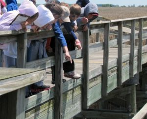 These Eco-Explorers found a good spot to observe fiddler crabs and animal tracks. Credit: ARE