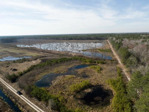 Freshwater wetland in Sussex County, DE.