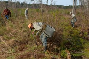 Planting seedling trees.