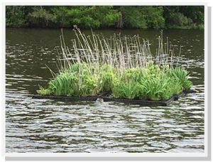 Floating Wetland Spring of Season 3
