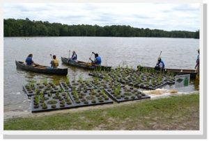 YCC preparing to install floating wetlands
