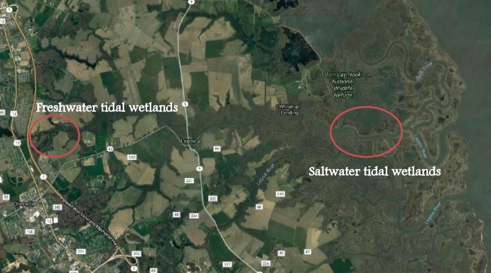 Freshwater tidal wetland location verses saltwater tidal wetland location