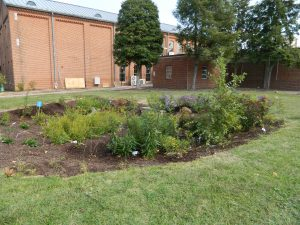Rain garden at DNREC building in Dover