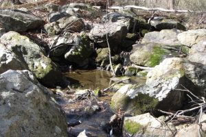 Figure 1a. Spring on a perched floodplain along a tributary of White Clay Creek. a. visual image.