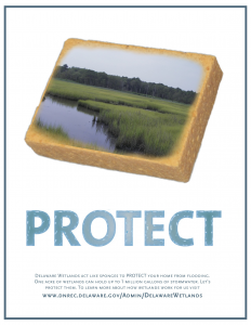 Wetlands Protect: Sponge graphic