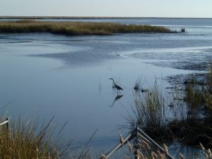 Tidal marshes and mudflats at Bombay Hook National Wildlife Refuge