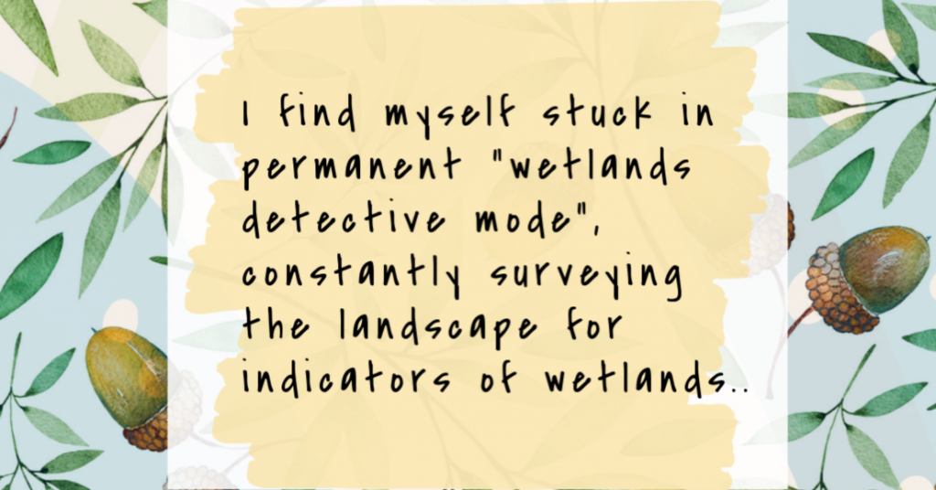 I find myself stuck in permanent wetlands detective mode, constantly surveying the landscape for indicators of wetlands