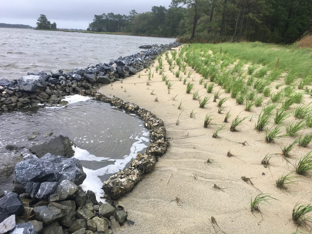 The completed Sasafrass living shoreline project after Hurricane Dorian passed in August of 2019.