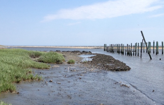 A small intertidal oyster reef in front of a tidal marsh wetland in Delaware. (Photo: DNREC Wetland Monitoring & Assessment Program)