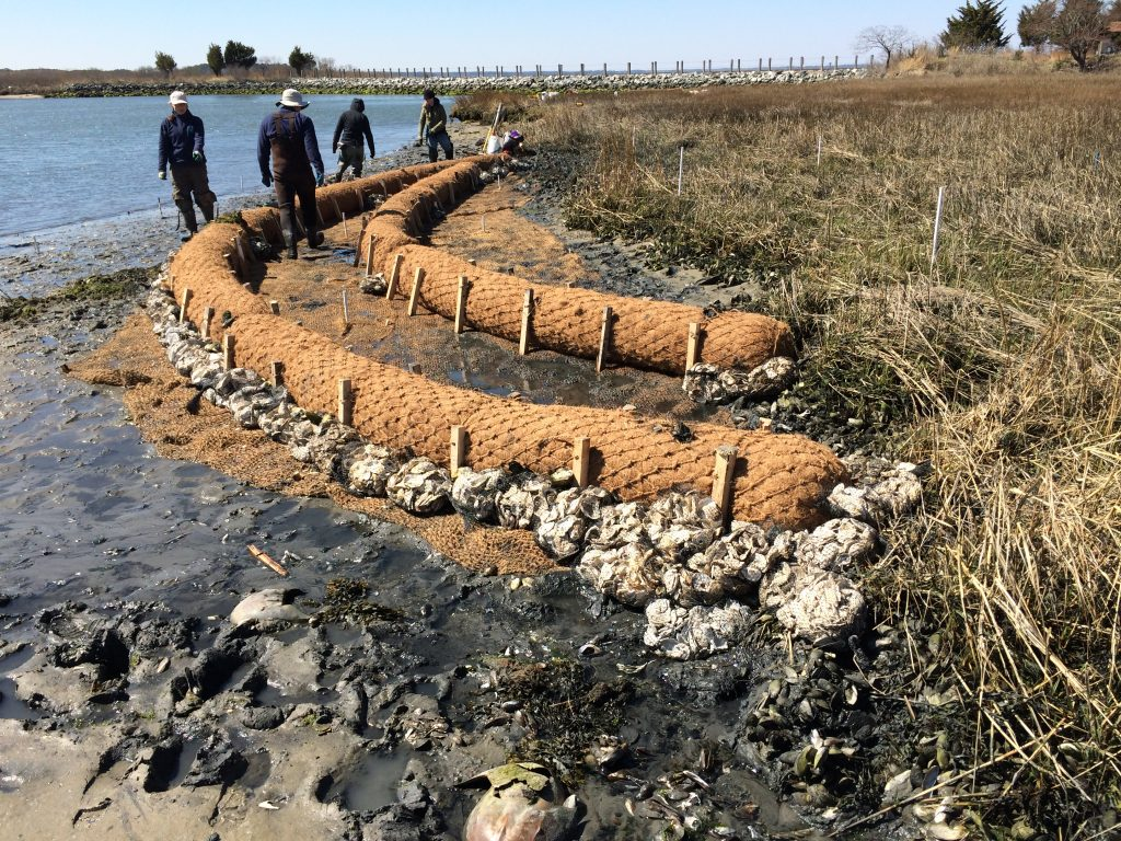 Oyster shell bags placed along the edge of a living shoreline project in Rehoboth, Delaware (Photo: DNREC Wetlands Monitoring & Assessment Program)
